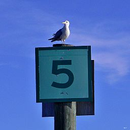 Number_five_sign